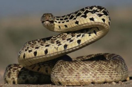 Snake Removal Services in the Metro Houston Area | Animal Control Wildlife - snake